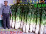 章丘大蔥種子