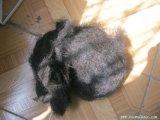 巨龙填充物卷马毛 床垫填充用卷马毛