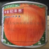 供应洋葱种子 黄皮洋葱【黄金冠】 桶装 优质蔬菜种子