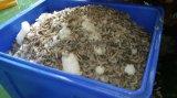 江蘇廠家供應大容量冷藏保溫箱 500升冷藏保溫箱 海鮮保溫箱 水產保溫箱