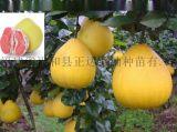 贵州红心蜜柚苗如何种植提高成活率,贵州红柚苗的最新报价