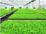 澳大利亚农研所蔬菜种植工招聘