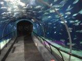 有机玻璃工厂承接海洋馆亚克力隧道工程