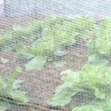 蔬菜大棚防虫网40目 农业防虫网