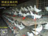 鸽子折叠笼,鸽笼, 养殖笼,鸽笼铁网,广东鸽笼批发