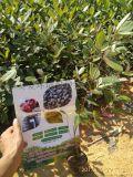 桃金娘岗棯种植场