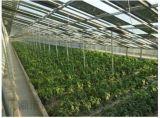 温室大棚农光互补低碳环保绿色潮流