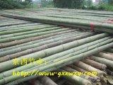 批发5米-10米大棚竹竿,2.5米菜架竹,3-4米旗杆竹,竹梢及毛竹