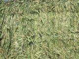 出售紫花苜蓿草捆 大庆隆泰牧草厂家 进口美国一级苜蓿草