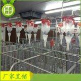 猪用自动化料线饲喂系统设备母猪定位栏料线吃料