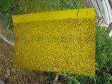 佳多农业优质黄色粘虫板24*12,蚜虫白粉虱专用粘虫板
