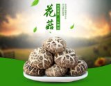 新貨 大別山花菇 農家香菇幹貨特級野生椴木花菇