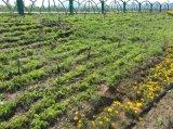 润扬绿:新疆节水灌溉施工现场