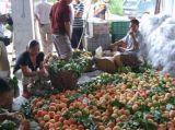 桃子苗,嫁接桃子树苗,桃子树苗品种,嫁接桃子树苗价格