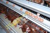 河南金鳳196*40*50冷/熱鍍鋅,Q235線材種雞籠