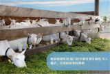 羊奶片价格,陕西凯达乳品集团有限公司