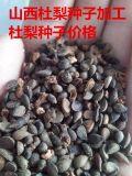供应陕西杜梨种子 山西杜梨种子价格