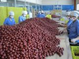 新疆大枣厂家直销批发价格