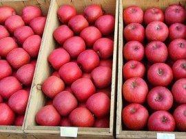 苹果-03