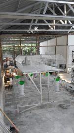 自动化品字形阶梯子养殖兔笼 新型兔笼 全自动兔笼批发