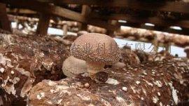 精品级香菇