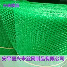 pp塑料平网,小鸡床垫塑料网,水产隔离网厂家