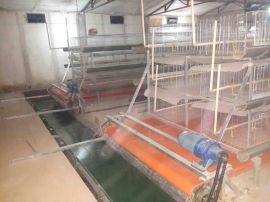 鸡笼厂供应养殖笼/笼养设备/新式鸡笼价格/长年生产销售-兆东鸡笼厂