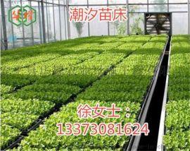 福州苗床网 花架网种植网养花苗床温室苗床