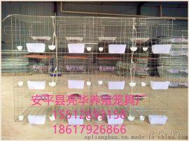 安平亮华养殖笼具厂现货供应广式鸽笼 广州鸽子笼 3层12位种鸽笼