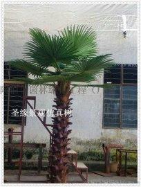 仿真棕榈树盆景_仿真棕榈树定制店_北京仿真棕榈树