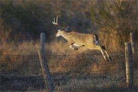 鹿围栏,塑料平网,防护网