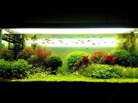 为你的家添置一个水底世界 — 草缸