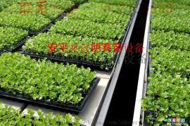 潮汐苗床的优势  无土栽培