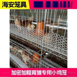 雏鸡育雏笼哪里有卖的厂家报价151-3185-8288