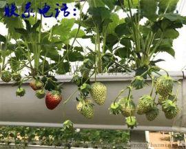 草莓架  立体草莓槽