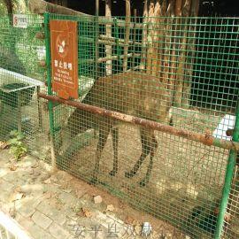 現貨供應防護養雞鐵絲圍欄荷蘭養殖網