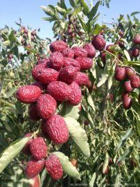 哪里批发新疆红哪里批发新疆红枣?