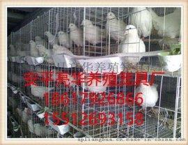 安平亮华养殖笼具厂家现货批发鸽子笼 广西鸽笼 南宁种鸽笼 肉鸽笼
