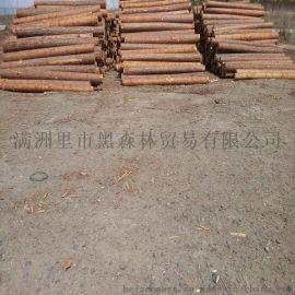 俄罗斯进口原木  口径自选
