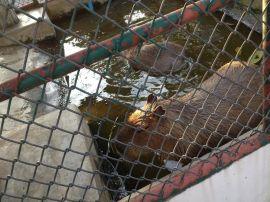 安平富凯动物园护栏网/动物园护栏网价格/动物园护栏网批发价格