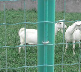 特价护栏散养鸡网围栏农场荷兰网圈地铁丝网护栏网养殖围网