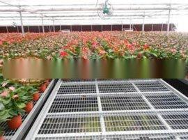 安平博超育苗床生产厂家