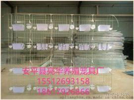 安平亮華養殖籠具廠現貨供應4層20位蛋鴿籠