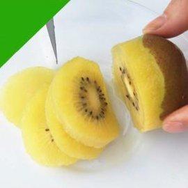 大量眉县原产地品种纯正专家指导成活率高金桃猕猴桃树苗