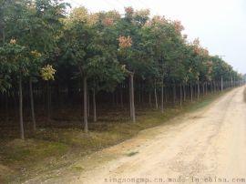 供应绿化行道树 西安苗木基地降价促销绿化工程苗木精品栾树