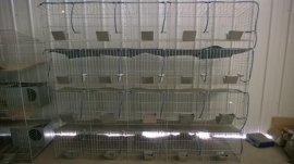 公兔笼 种兔笼厂家 竹地板兔笼