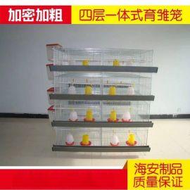 特价小鸡笼育雏笼雏鸡笼养殖厂专用笼4层一体式鸡笼子