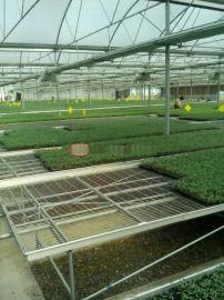安平博超温室苗床、苗床网生产厂家