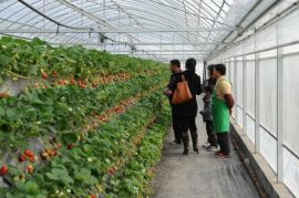 观光园草莓种植槽,农业现代园草莓槽,PVC草莓槽,质量好寿命长
