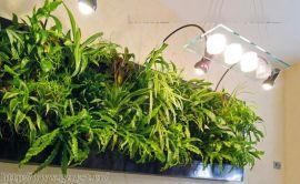 贵州贵阳植物墙公司的立体生态植物墙施工价格勘察市场最低价